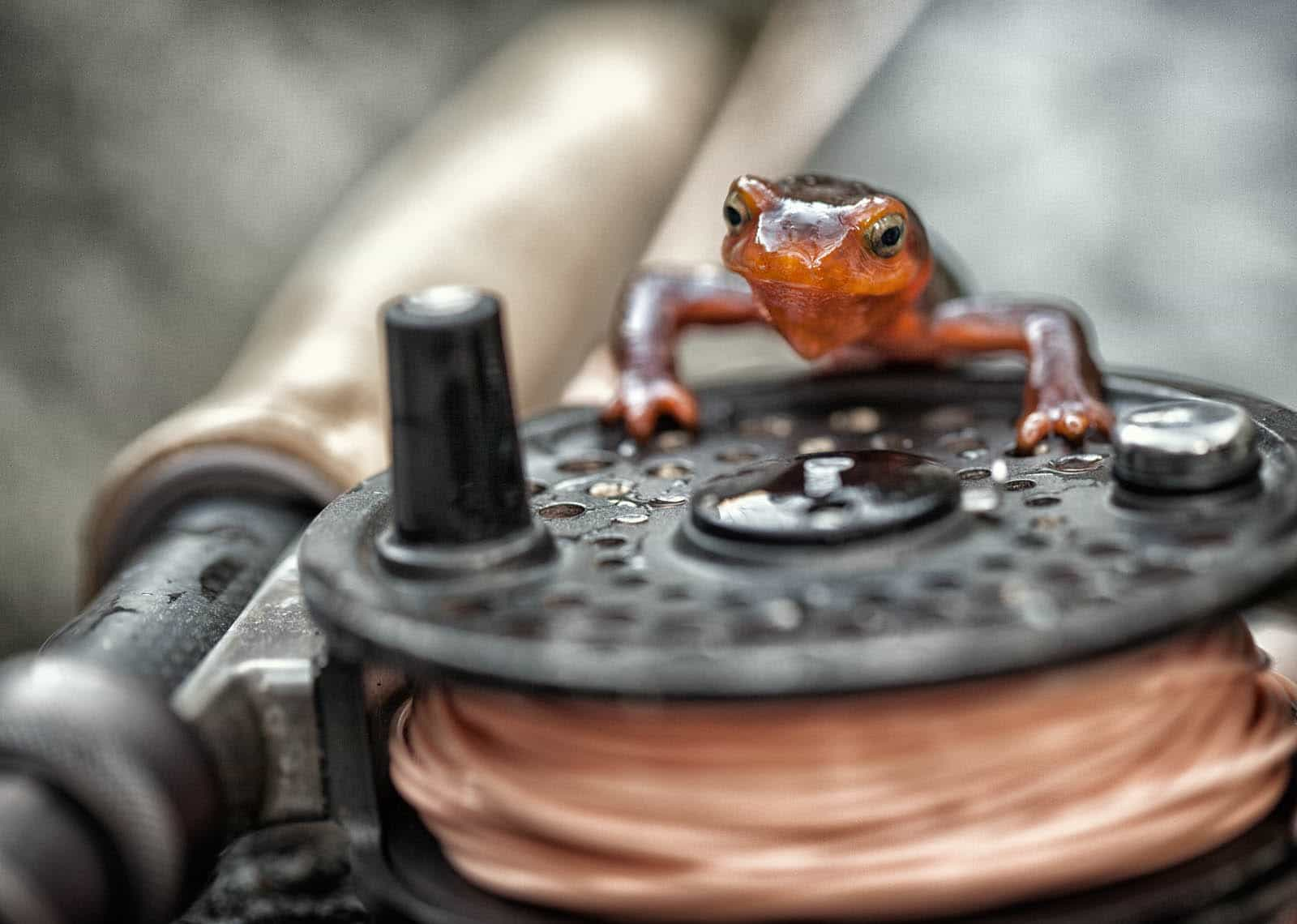 Newt on a reel.
